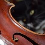 Lottie Copley - viola - County Youth Orchestra