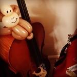 Sam Warner - Alumni - ex County Youth  Orchestra cello - 2007-2012